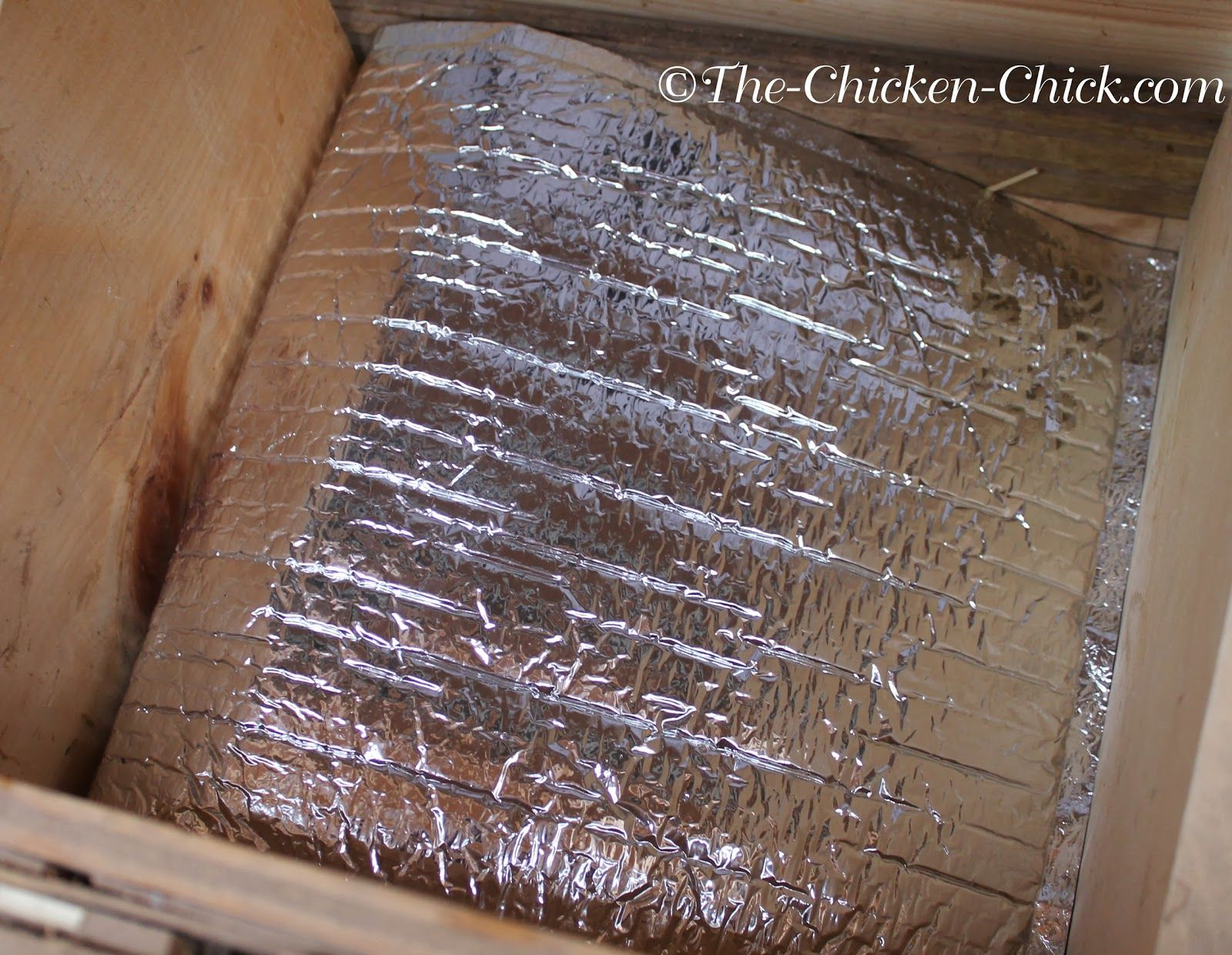 Frozen eggs the nest box cozy winter food safety tips