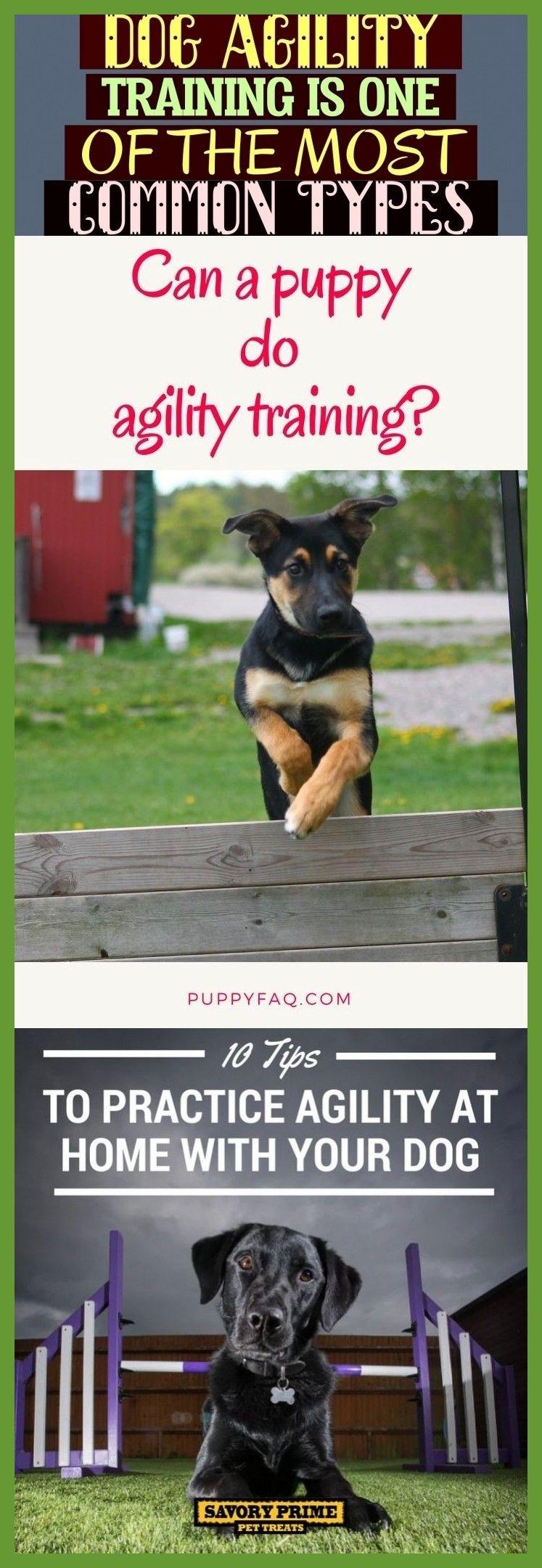Dog agility training 45de56b3c1a8e3 with images