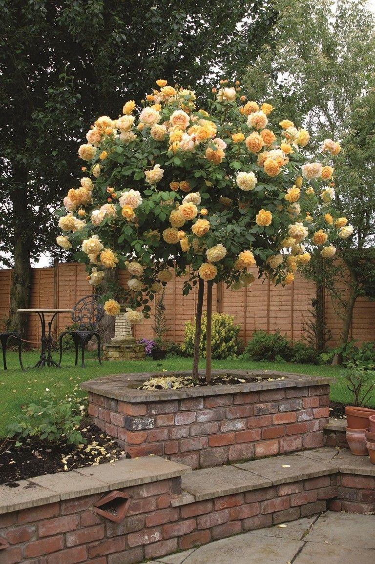 145 Finest Front Flower Bed Design Ideas Front Flower Beds Rose Trees Flower Bed Designs