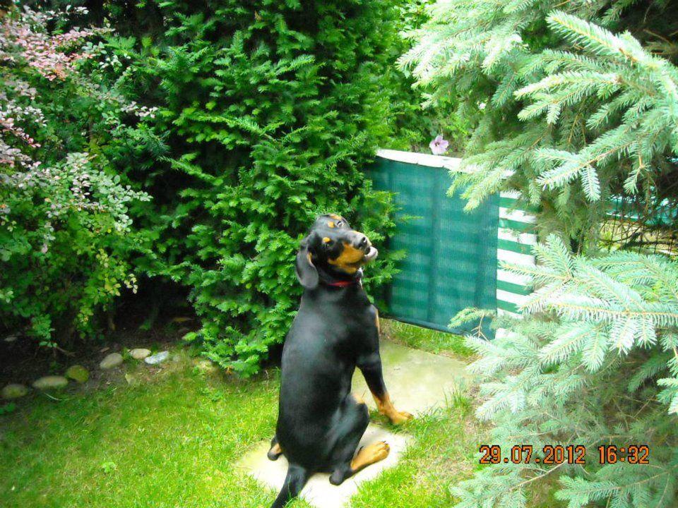 Emily The Dog Hunde Katzen