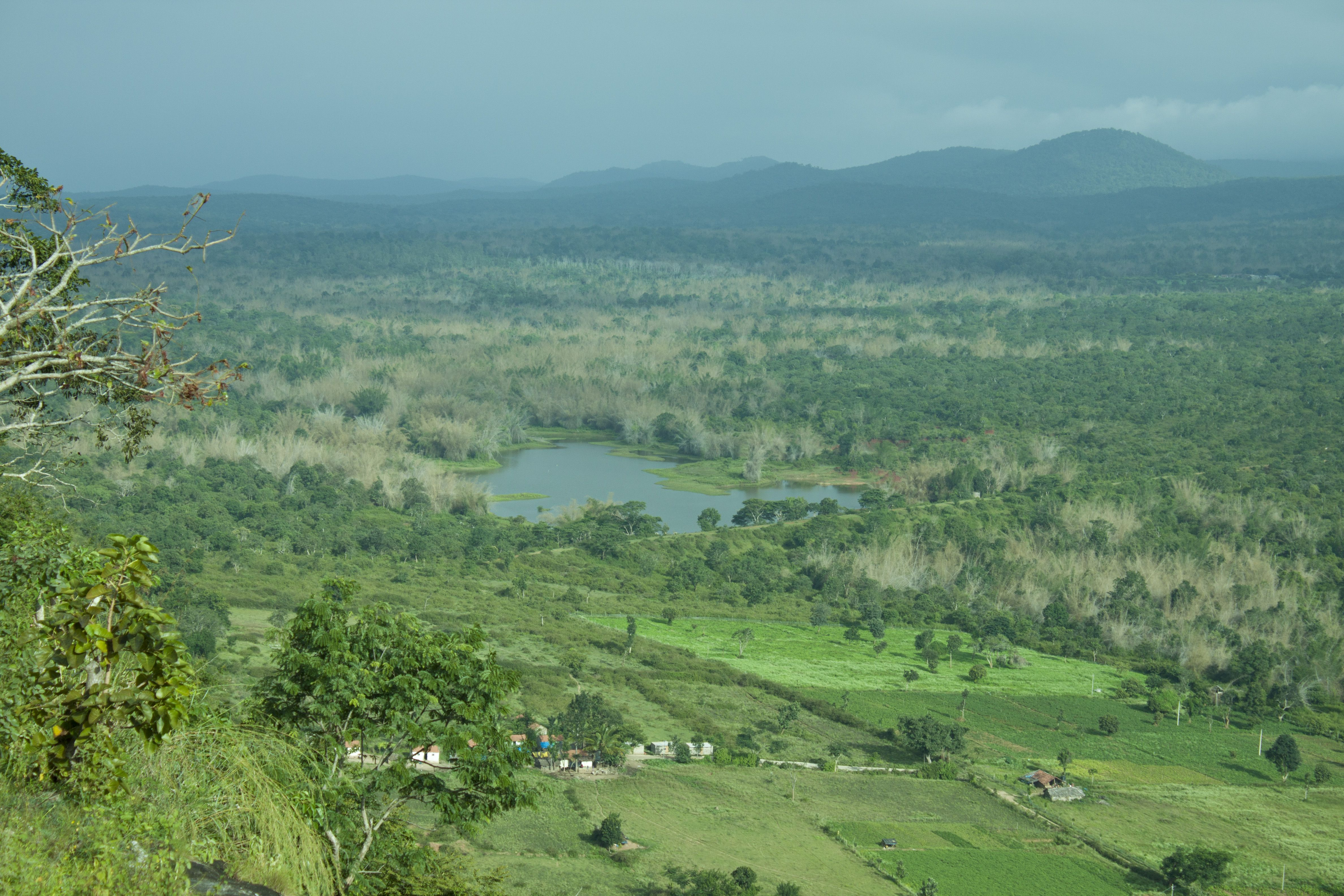 Bandipur National Park is a beautiful wildlife sanctuary in ...