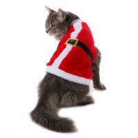 Cat Clothes Costumes Cat Sweaters Petsmart Sweaters 4 Our