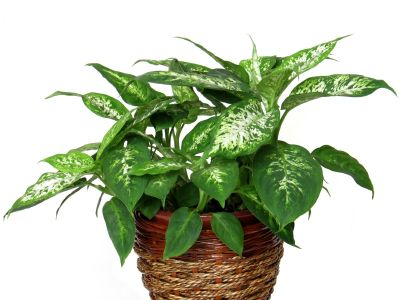 indoor plants that remove toxins from the air and plants that maybe harmful to children and