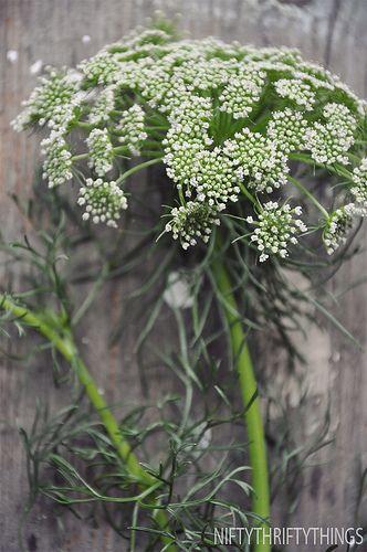Pin Auf A Flower Is
