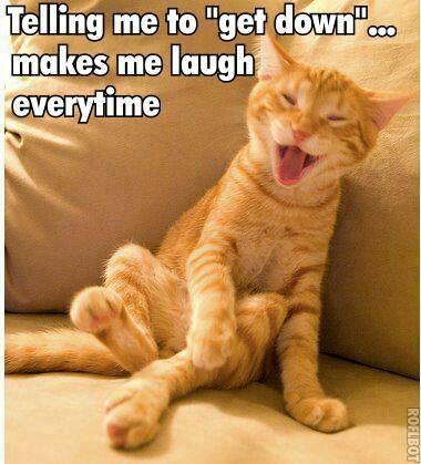 a83b3ee5f650e3b75d7bcbc209f07d6e get down cat meme lolcat memes & funny pics pinterest,Get Down Cat Meme
