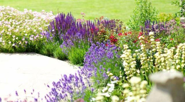 Blumenbeete mit Sommerblumen