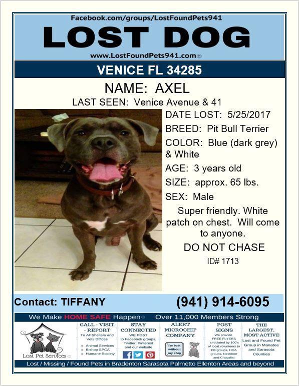 Have You Seen Axel Lostdog Lost Pitbull Venice Fl