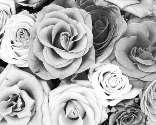 black and white flowers black and white floral flower flowers grey - Black And White Flowers