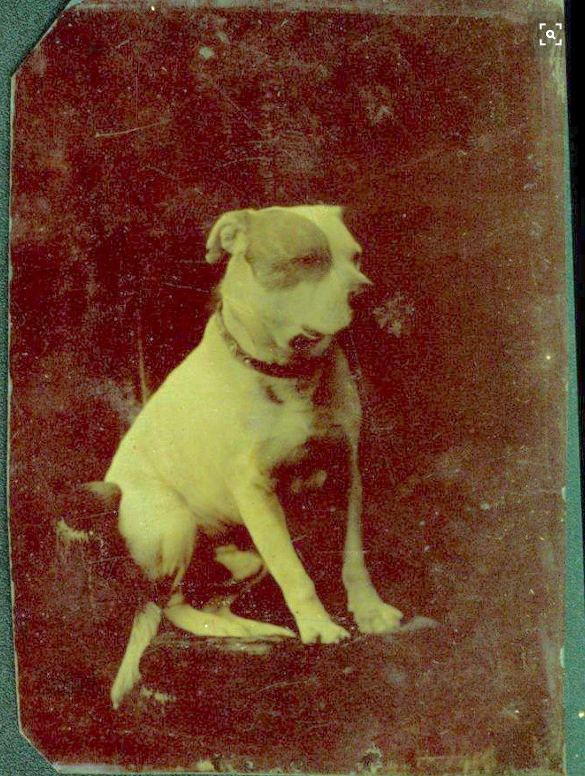 Pin By Rigorously Thinking On Photos Nanny Dog Vintage Dog