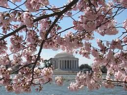 Visit DC while the Cherry Blossoms are in full bloom.