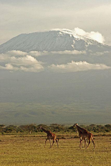 Ambosli Park Africa