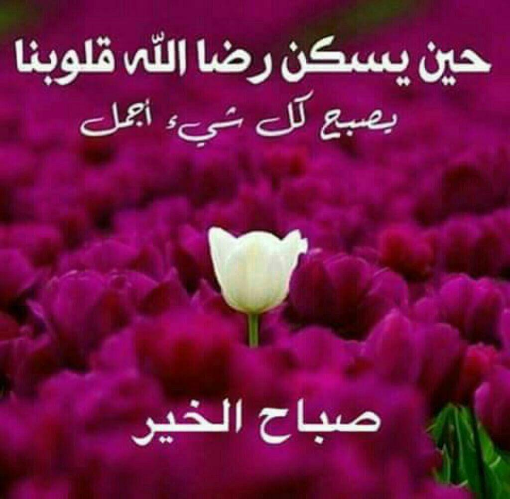 Pin By الحمد لله تكفى On صباح الذاكرين Beautiful Morning Messages Good Morning Picture Good Morning Beautiful
