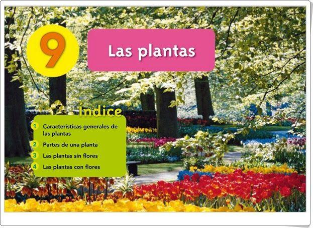 Unidad 9 De Biología Y Geología De 1º De E S O Las Plantas Biología Plantas Actividades Interactivas