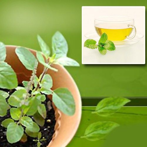 Are you under too much stress? Try the magical Ayurvedic herb called tulsi most commonly known as 'basil.' Certain teas and supplements contain this herb which helps regulate your levels of stress hormone cortisol. Drive all that unnecessary stress away with this holy basil.