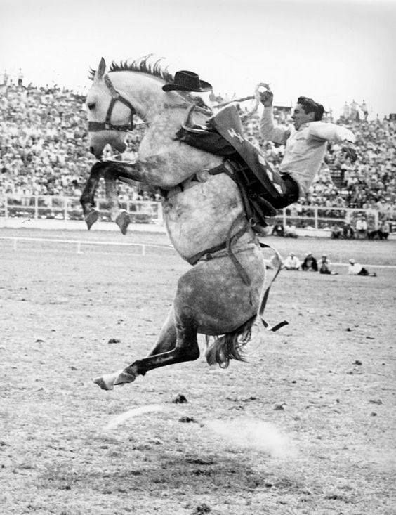 1962 World Champion Saddle Bronc rider, Kenny McLean  The
