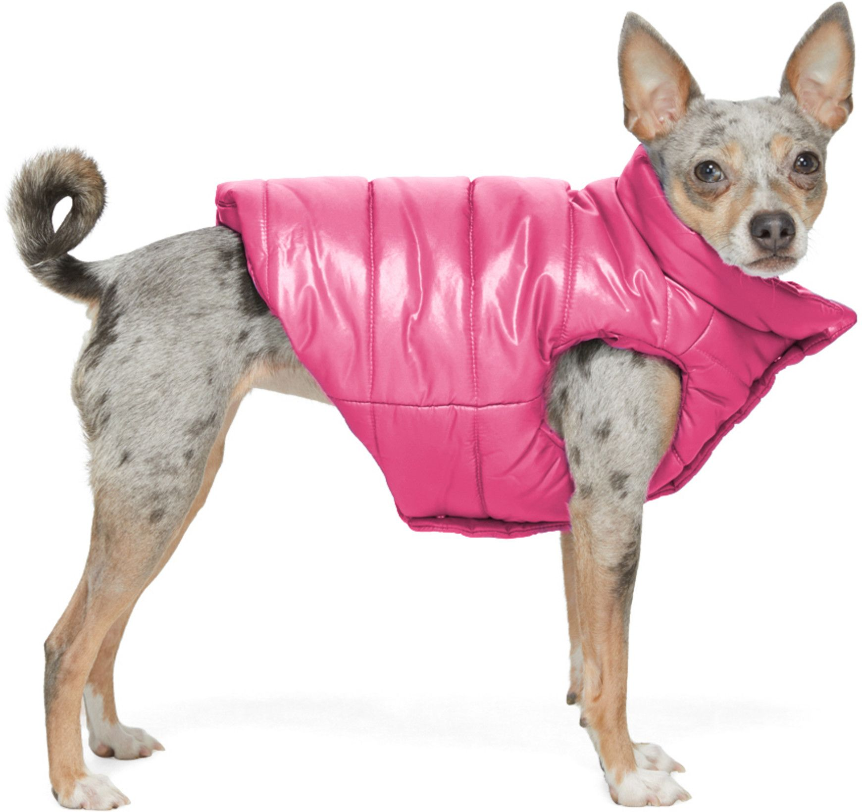 Moncler Genius Pink Poldo Dog Couture Edition Insulated Jacket Ssense In 2021 Moncler Dog Lovers Dogs [ 1640 x 1741 Pixel ]