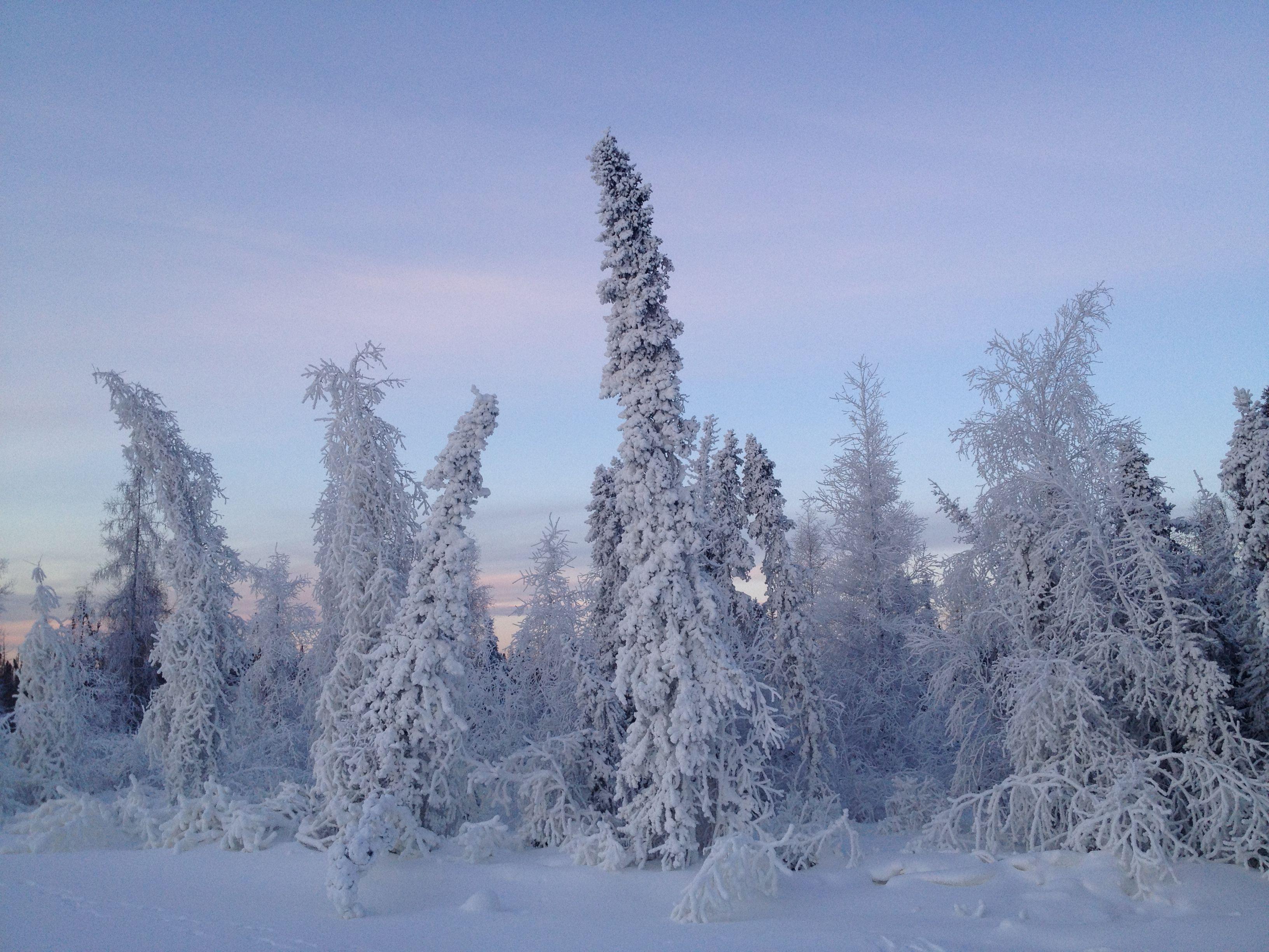 whoville  tree xmas christmas