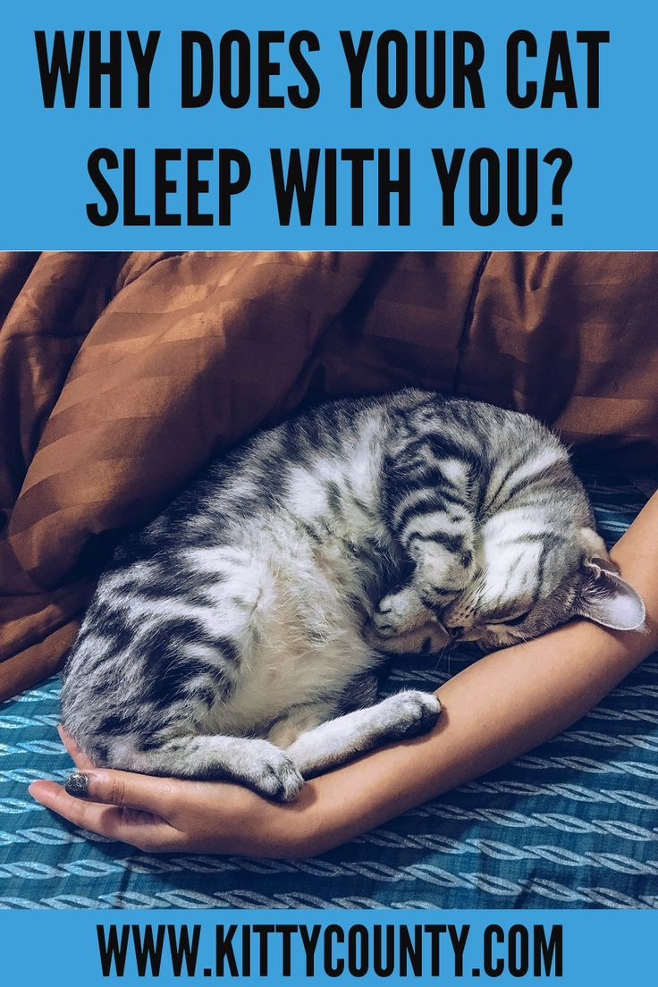 Why Does My Cat Sleep With Me Here Are The 7 Reasons Kitty County In 2020 Cat Sleeping Cats Sleeping Kitten