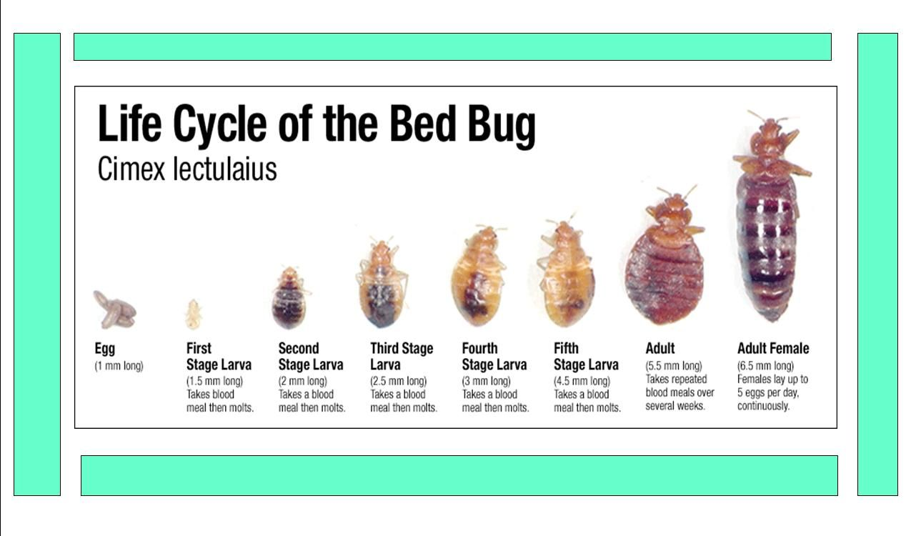 If You Think You Just Discovered A Bed Bug Ask Yourself These