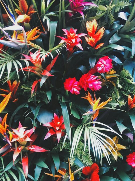 Pink And Orange Tropical Flowers With Green Leaves