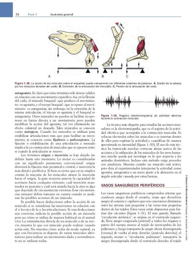 Vistoso Libro De Colorear De Anatomía Veterinaria Galería - Páginas ...