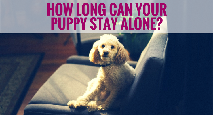 How Long Can Your Puppy Stay Alone? Stay alone, Puppies