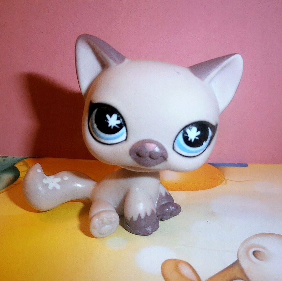 Littlest Pet Shop Kotek Shorthair Kot Lps Kotek Kot Lps