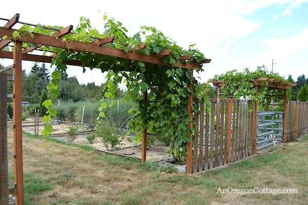 garden landscape ideas wooden pergola grape arbor hedge plants brick wall |  Wooden garden arbor | Pinterest | Wooden pergola, Grape arbor and Garden ...