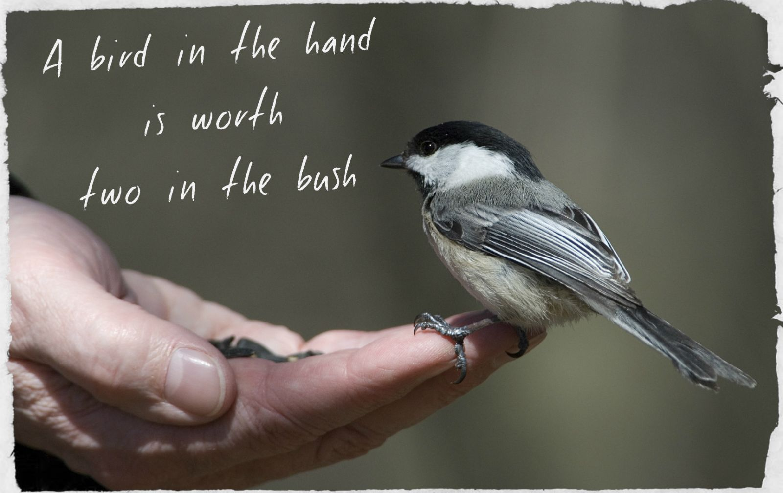 "stories on a bird in hand is better than two in a bush Quotes uncovered: a bird in the hand november 18 ""a bird in the hand is worth two in the bush"" freakonomics ® is a registered service mark of."