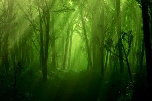 Enchanted Forest Full Screen High Quality Wallpaper Free For Desktop Background Widescreen Desktop Images Abstract 2560 1600
