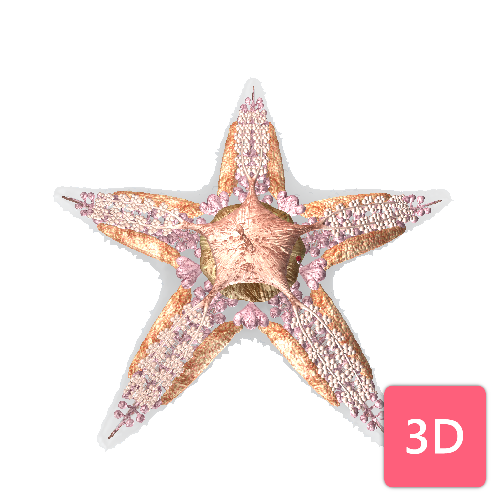 Anatomy of our 3D sea star(fish)!See deeper, explore further and pin ...