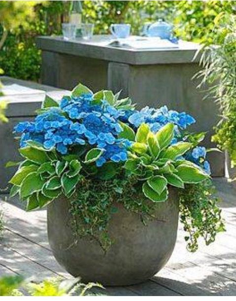 Potted Garden Plants Pin by jennifer ellis on natures beauty pinterest plants i need this on each side of the entry walk to the pool house workwithnaturefo