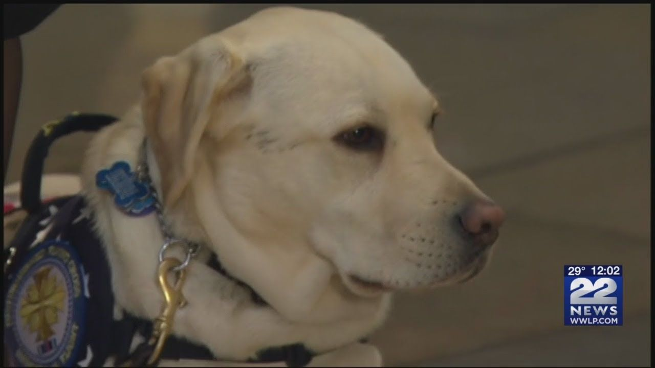 Dogs Training In Western Massachusetts To Be Like Sully Bush S Service Dog Dog Training Dogs Service Dogs