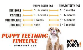 puppy teething chart Google Search (With images) Puppy