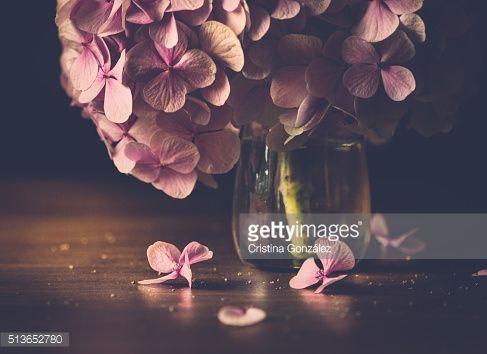 Stock-Foto : Petals