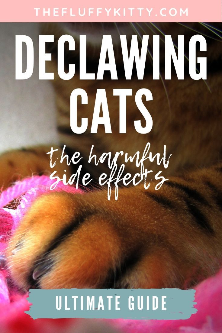 The Harmful Side Effects of Declawing a Cat Declawing
