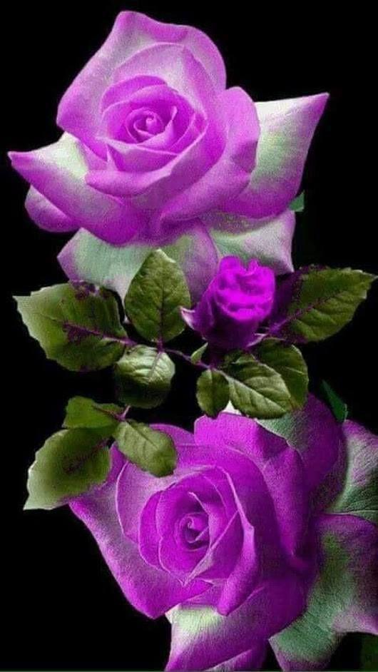 Epingle Sur Roses