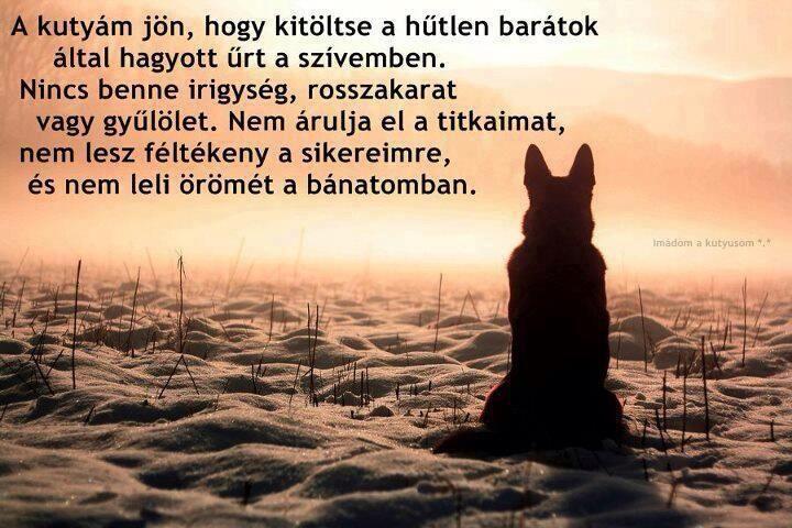 hűtlen barátok idézetek idézet | Dog heaven, Dogs, Dog silhouette