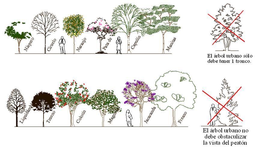 Pin en arquitectura - Lista nombre arbustos ...