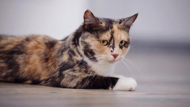 Healthfully Cat Diseases Slippery Elm Bark Kidney