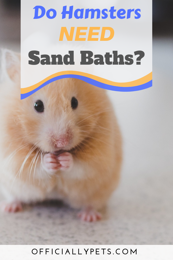 What Is The Best Sand For Hamsters Do Hamsters Need Sand Baths