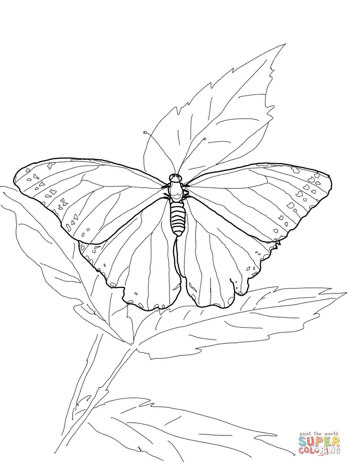 Blue Morpho Butterfly Super Coloring Butterfly Coloring Page