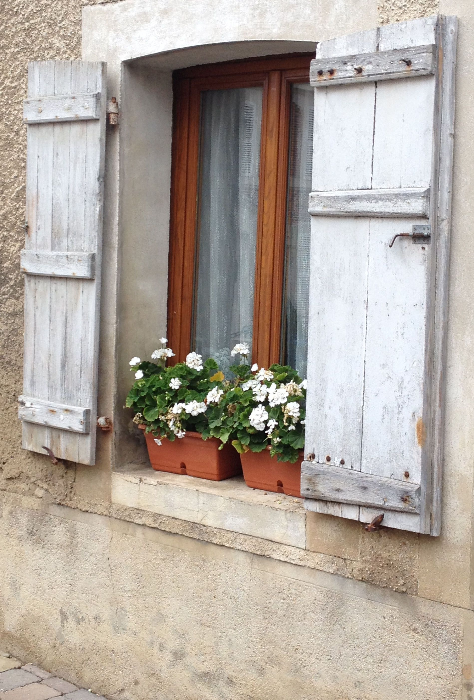 French Village Container gardening, Types of flowers
