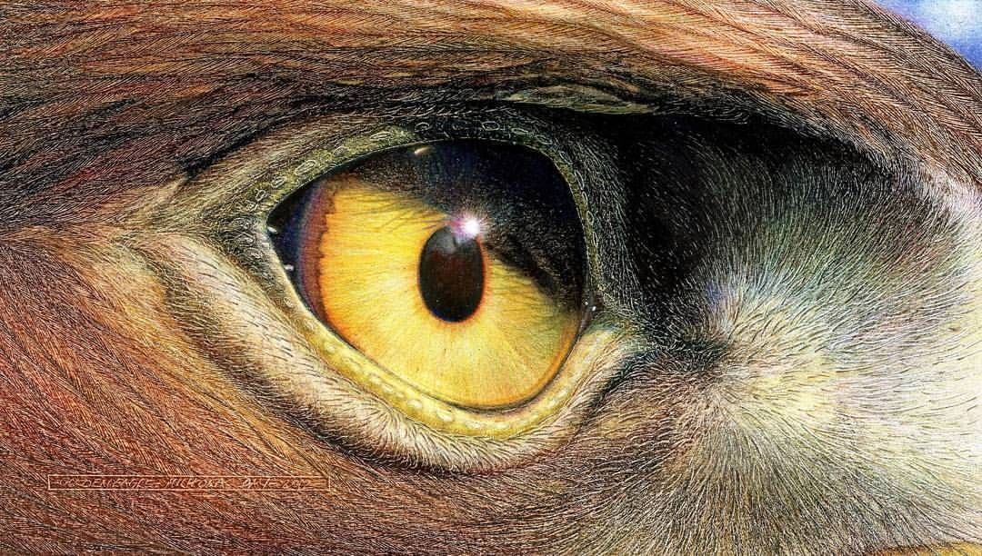 Golden Eagle Eye By Nick Day Birdseye Wacfeature Goldeneagle