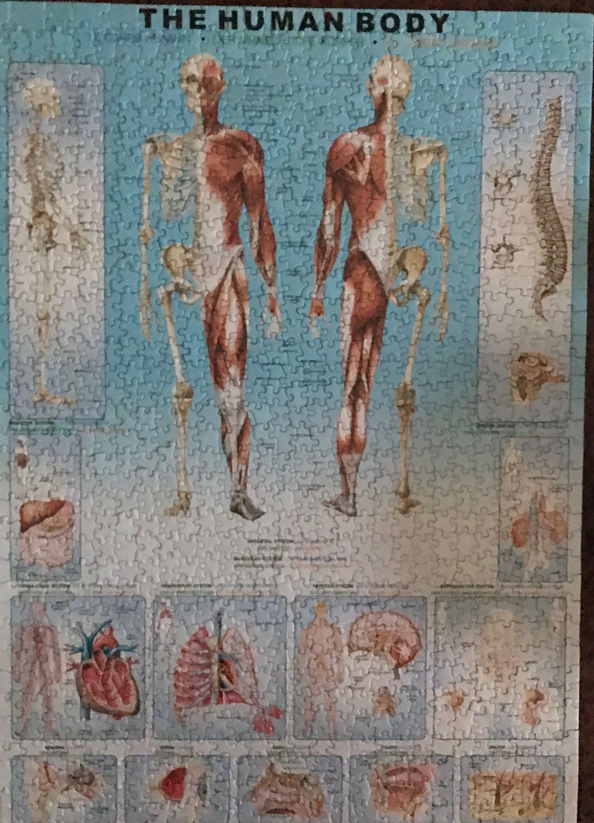 The Human Body\