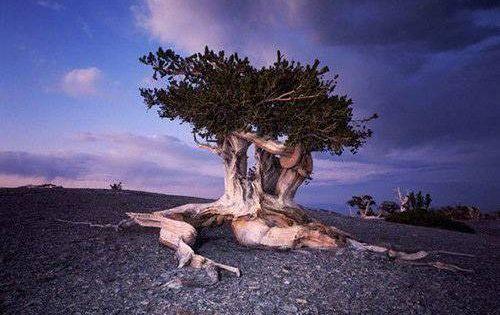 Pin Von Friederike Schwarzbauer Auf My Trees Baum Fotografie Alte Baume Naturbilder