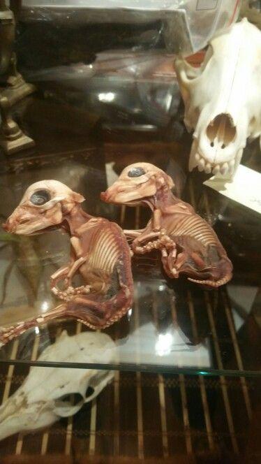Cutest lil mummified piglets