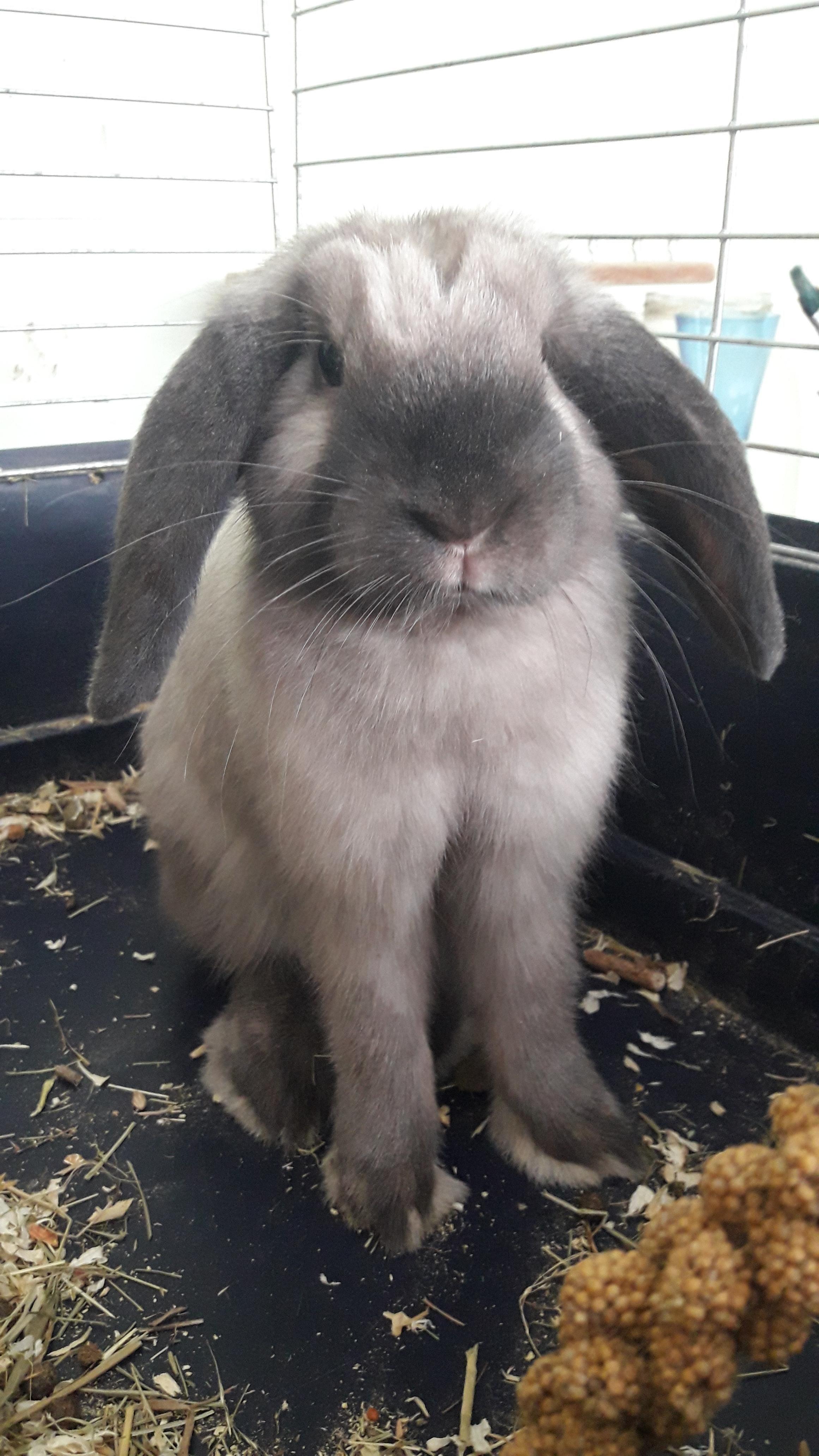 Rabbit Decor Make Your Bunny House A Bunny Home Free Shipping