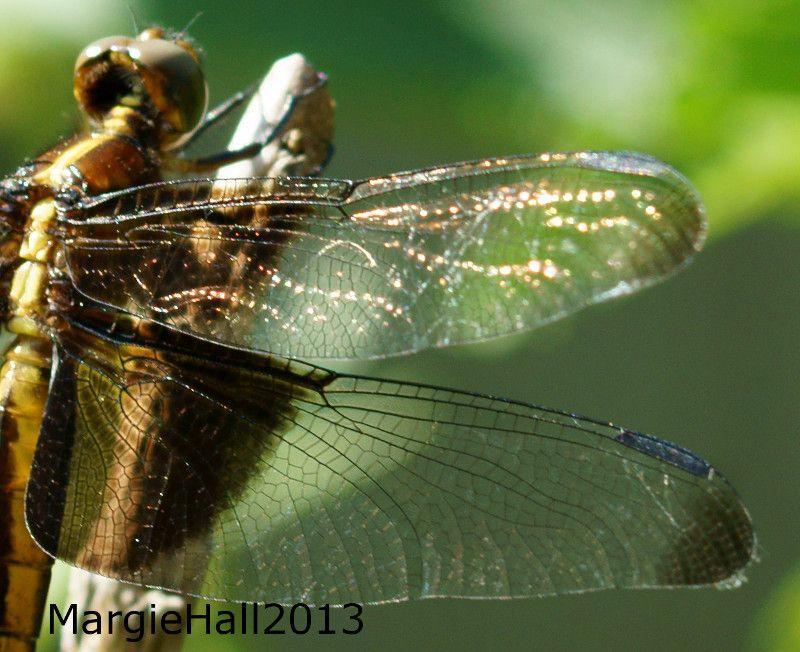 Illuminating wings..