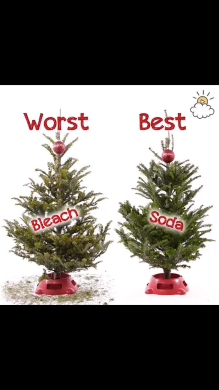 Use soda or vodka to help preserve christmas trees | Holidays ...